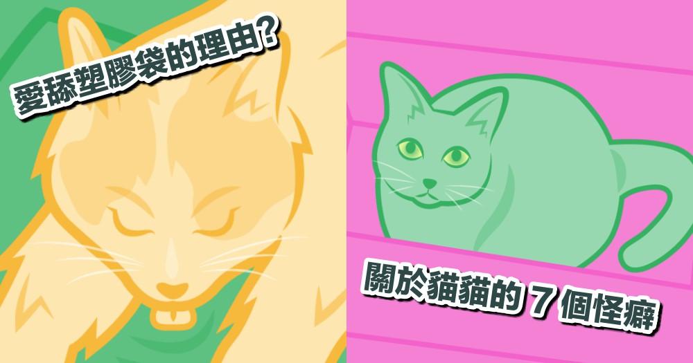 貓很愛舔塑膠袋?到底為什麼!用 7 張圖解讀貓貓『怪怪行為』背後的意義~