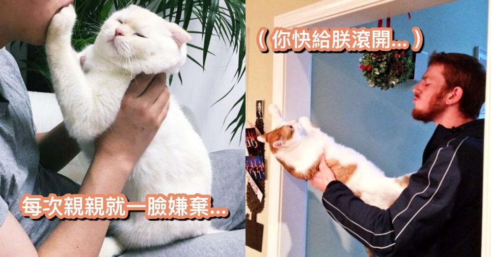 為什麼貓不愛被『親親』?原來這個具有挑釁意思~難怪會被貓掌伺候呀!