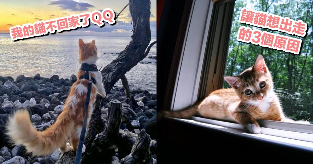 我的貓怎麼不回家了!貓貓選擇離家出走的 4 個原因,奴才你知道嗎?