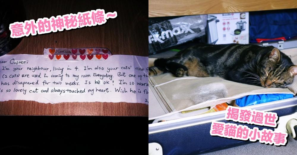 愛貓車禍去世,沒想到因為鄰居的一張小紙條~意外揭發貓貓生前的小秘密!