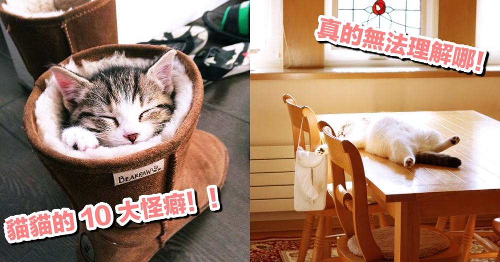 你家貓咪有怪癖嗎?貓貓最愛做的 10 件怪事~奴才真是搞不懂哪!