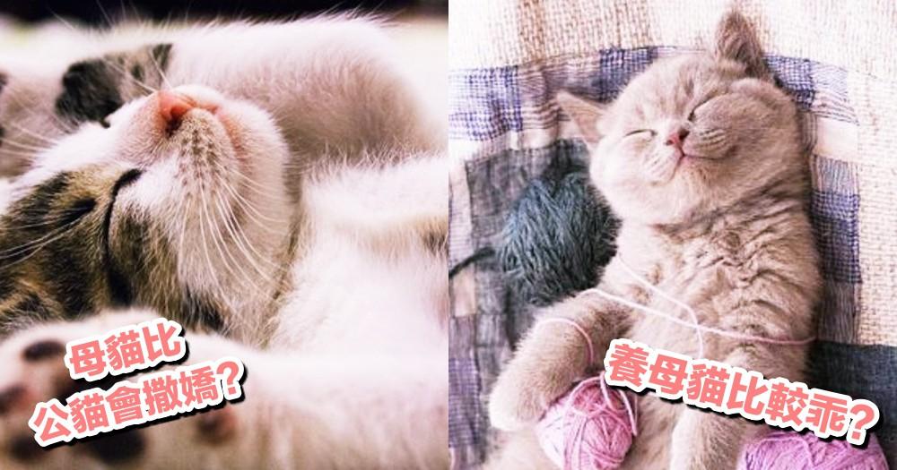 【貓咪小知識】母貓一定比公貓容易撒嬌?養母貓最好?獸醫:不一定!!