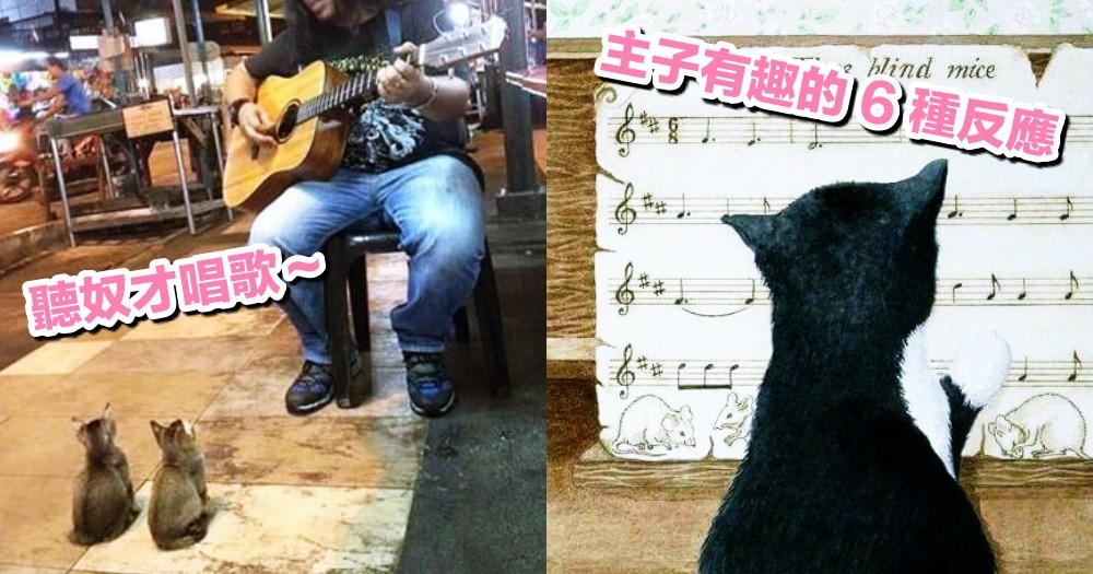 貓貓聽得懂歌聲?網搜貓咪聽到奴才唱歌的 6 種反應!你家是哪一種?