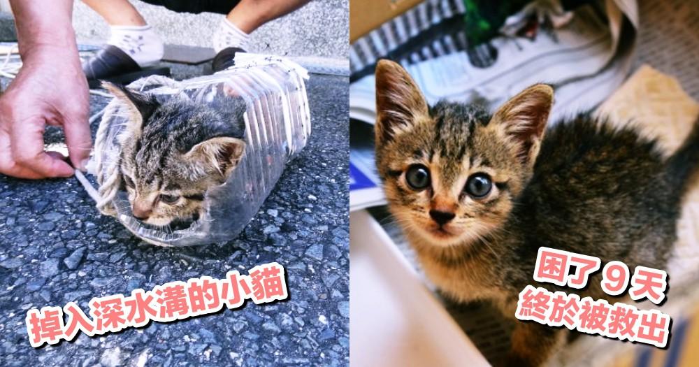 救貓靠這招!日本網友花 9 天自製『寶特瓶釣貓術』,成功救出掉入超深水溝的小貓!