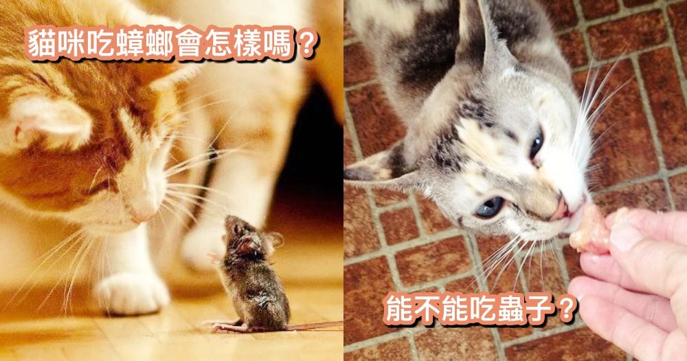 貓貓吃了蟑螂會怎樣嗎!!主人別慌,跟著這樣做就對了~~
