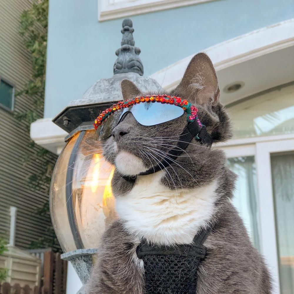 sunglasscat