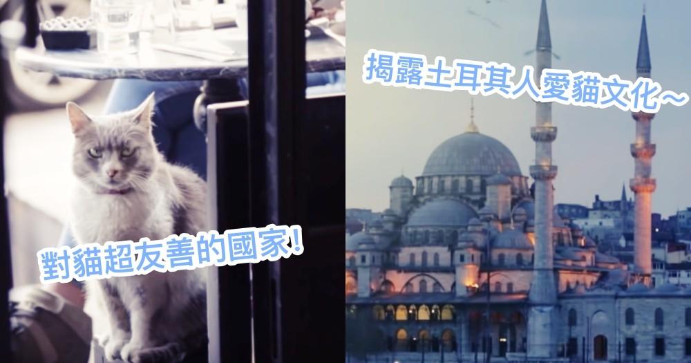 為何土耳其的浪浪都不怕人?電影《愛貓之城》揭開土耳其愛貓文化的神秘面紗!