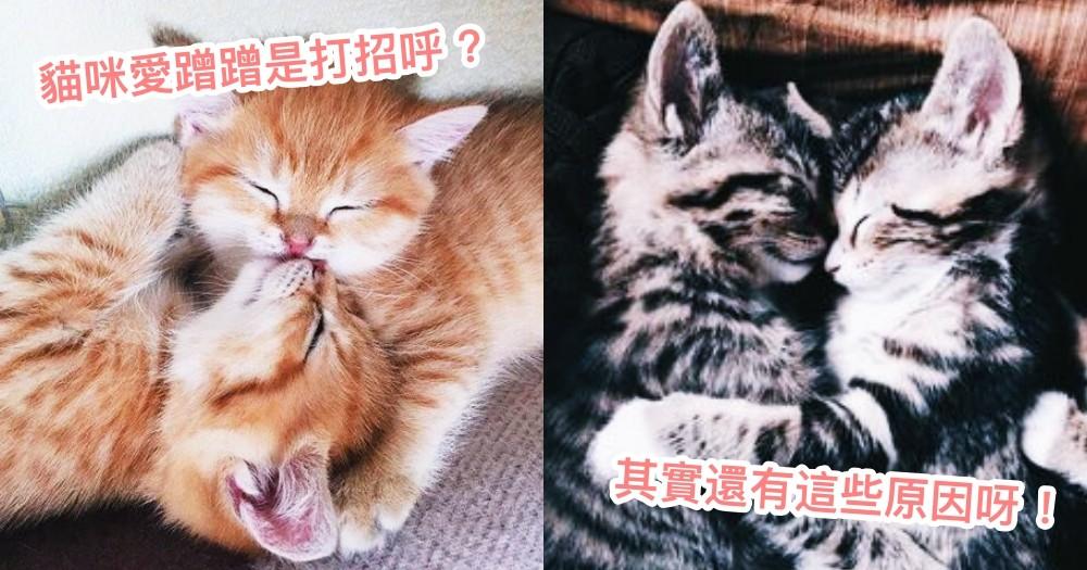 貓咪磨蹭就是在撒嬌?其實還有 4 個原因!關於貓貓蹭蹭的神秘魅力!