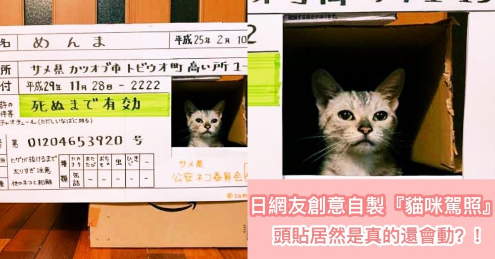 這可不是 JPG!日本網友用紙箱自製『真貓駕照』,超有創意的可愛大頭照竟會動呢!