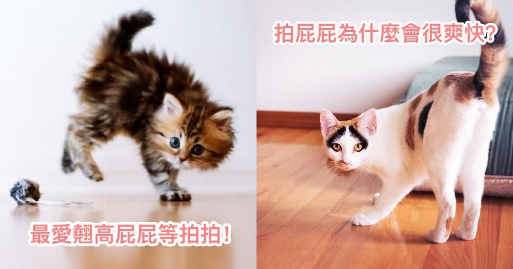 最誘人的角度!一摸屁屁就翹高,你家也是這樣嗎!其實貓貓會翹屁屁有 4 種原因唷!