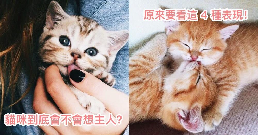 要怎麼知道貓咪想不想我?貓咪想念主人的 4 種表現!快看中了沒~