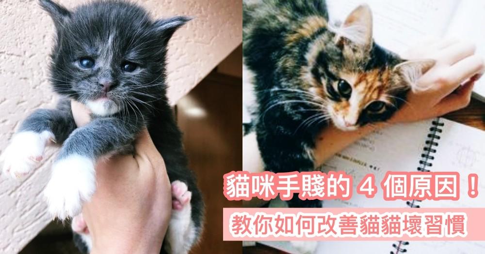 《貓咪為什麼手賤的 4 個原因》貓奴跟著這樣做!教你如何改善牠們的壞習慣~