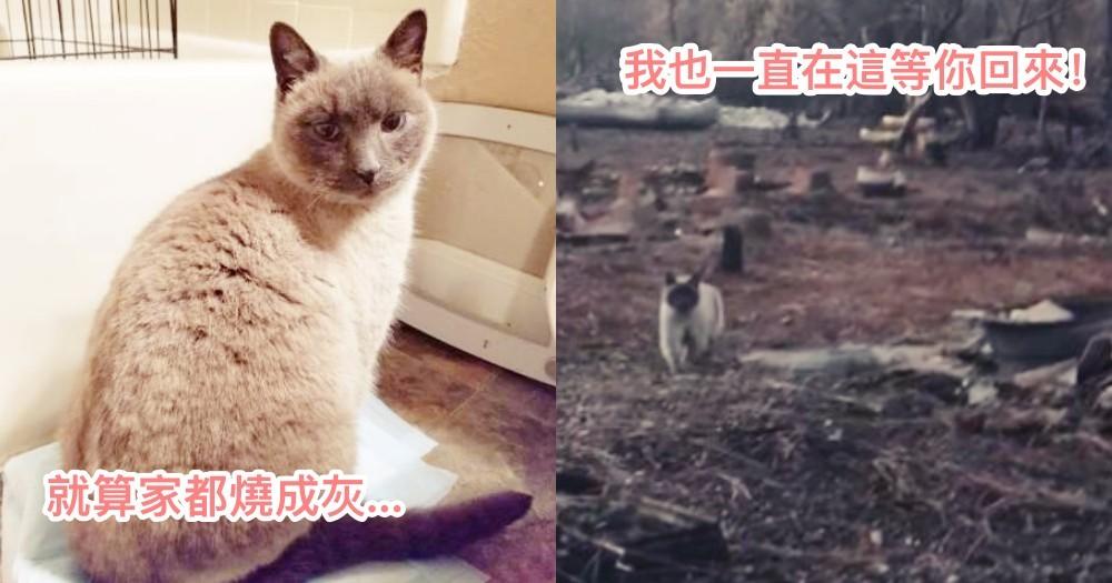 加州大火的走失貓,一直守在燒成灰燼家園中,等待主人回家!網哭:重逢畫面太感人QQ~