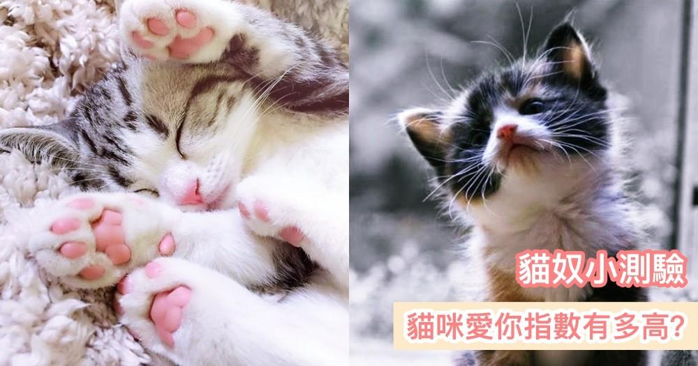 【貓奴小測驗】你家貓咪愛你指數有多高?看看你有沒有中以下這 7 點吧!
