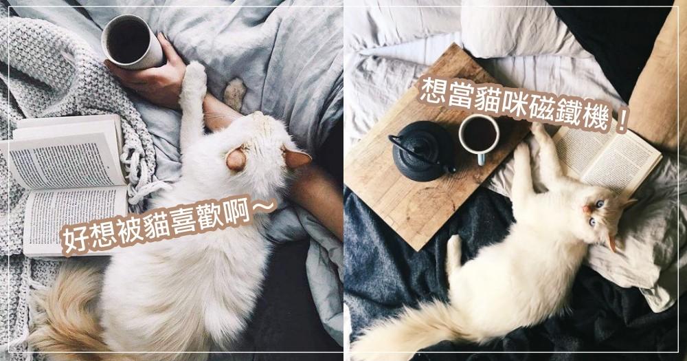 好想變成貓咪磁鐵呀!到底怎樣才會讓貓貓『尬意』呢?原來貓咪喜歡這 5 種人!