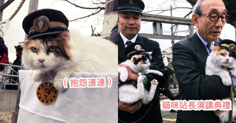 12 週年紀念典禮!二代貓咪站長被抱上台致詞,對著麥克狂喊「喵~」,笑翻網友:滿滿抱怨XD