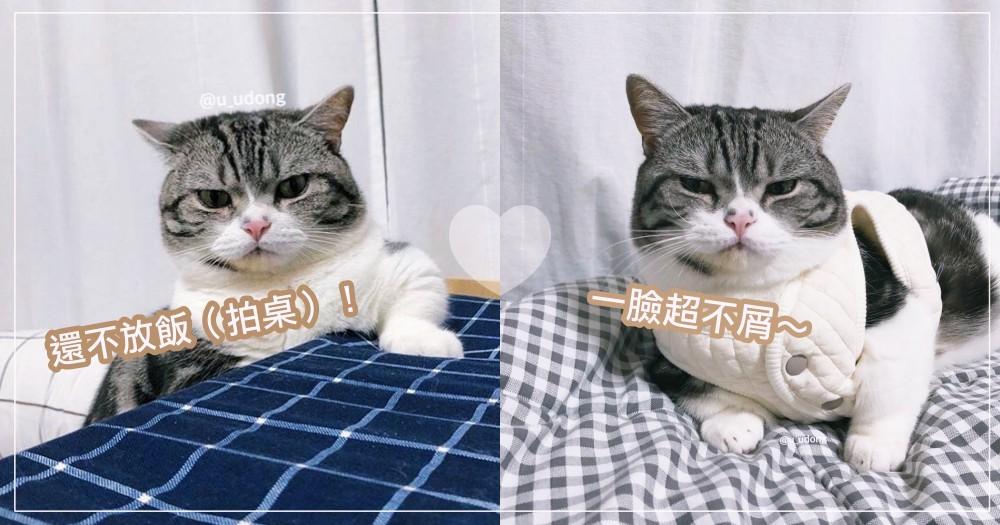 拜託你瞪死我吧 ♡ 可愛的外表下藏有「霸氣貓皇魂」,韓國短腿貓讓萬千奴才跪倒啦!