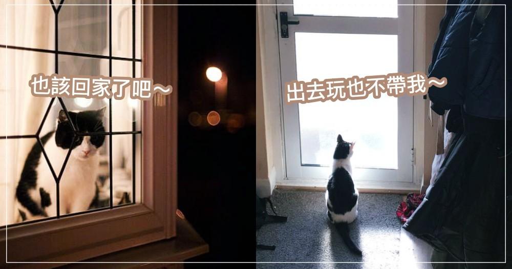 【貓知識】貓咪會在門口等主人回家?要通過檢查才准進門?解密貓貓會這樣做的 3 個理由!