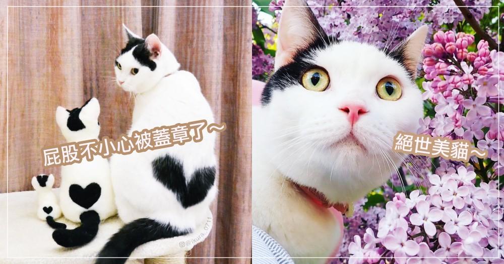 貓界「石原里美」!日本絕世美喵頂著中分頭,轉身迸出驚喜大愛心 ♡ 萌的貓奴一地血呀~