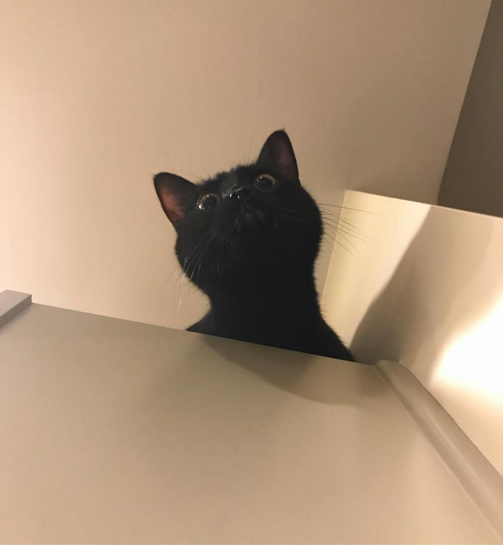 i_am_shitty_kitty