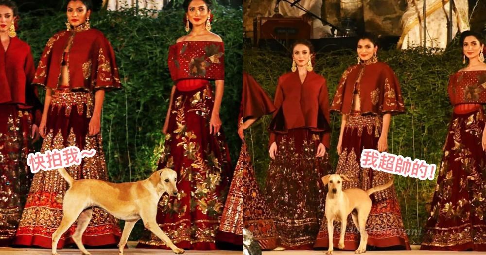 印度時裝秀被亂入!一字排開的名模們都不及『牠』,一登場瞬間成全場鎂光燈焦點~