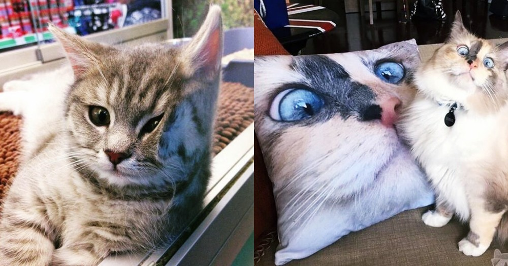 為什麼每個人都應該要養貓!關於貓咪的 10 個魅惑人心的神奇力量,你也中招了嗎?