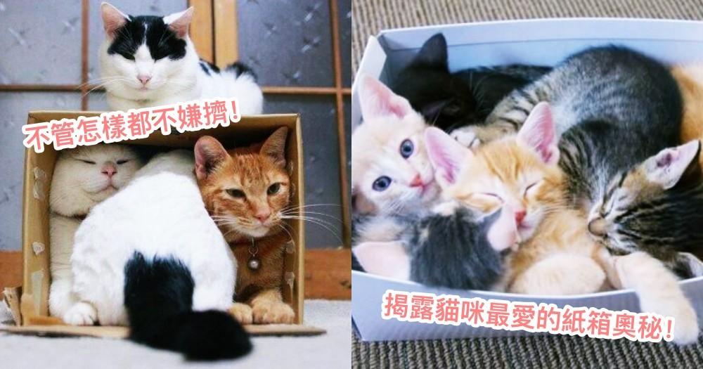 紙箱到底有什麼魔力?讓貓咪喜歡躲在箱子裡的 3 種原因~原來密閉空間是致命吸引力!
