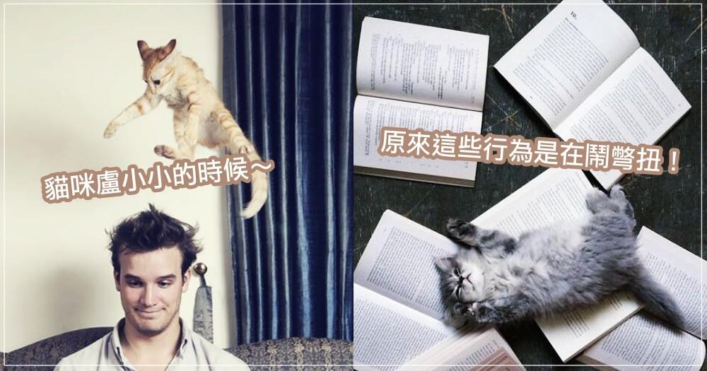 貓咪很愛魯小小?!關於貓咪的 7 種「彆扭行為」,其實人家是在跟你撒嬌討拍拍啦~