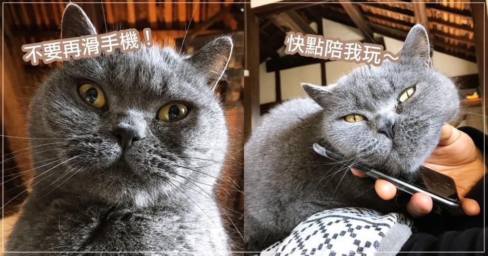神煩主子求關注!日本貓奴用「這招」霸氣收服,立刻就讓貓主爽到乖乖瞇瞇眼~
