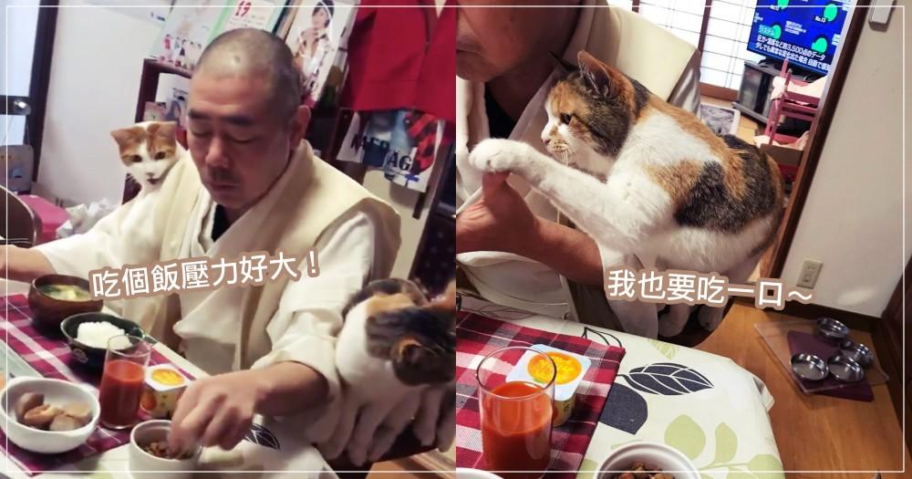 日本貓奴住持的早晨日常!每天吃早飯都被 4 隻貓圍繞『盯哨』,網友噴笑:壓力神大!!