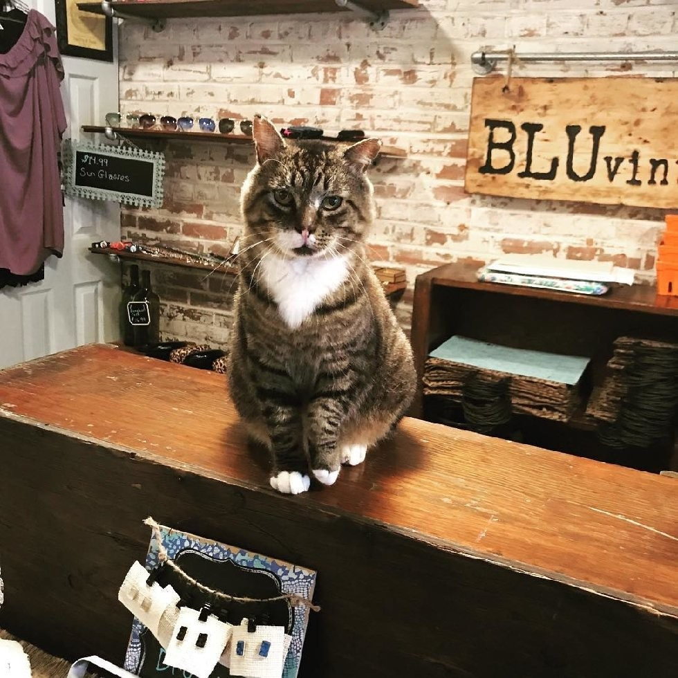 @larry_the_security_cat