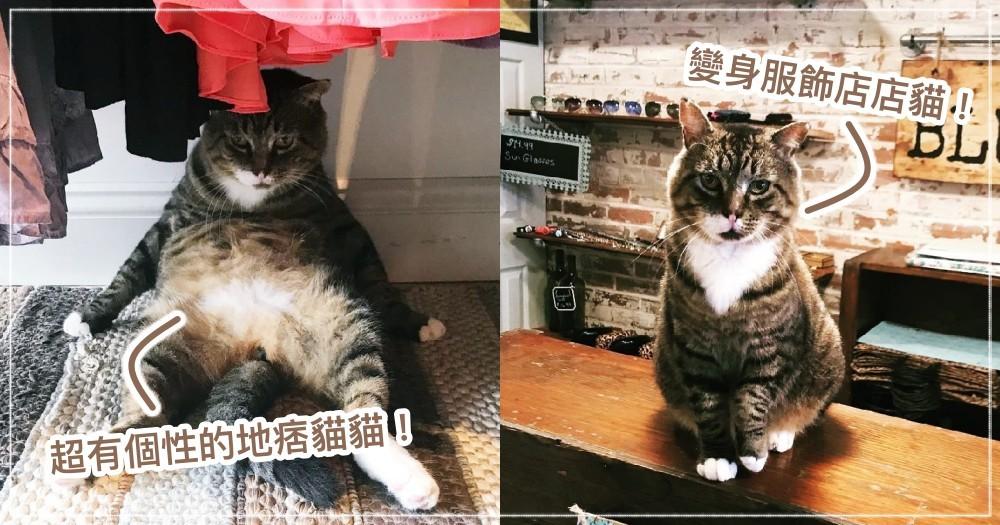 地痞流氓被收編!國外貓奴用愛融化,大轉性成「暖萌帥店貓」的勵志故事~