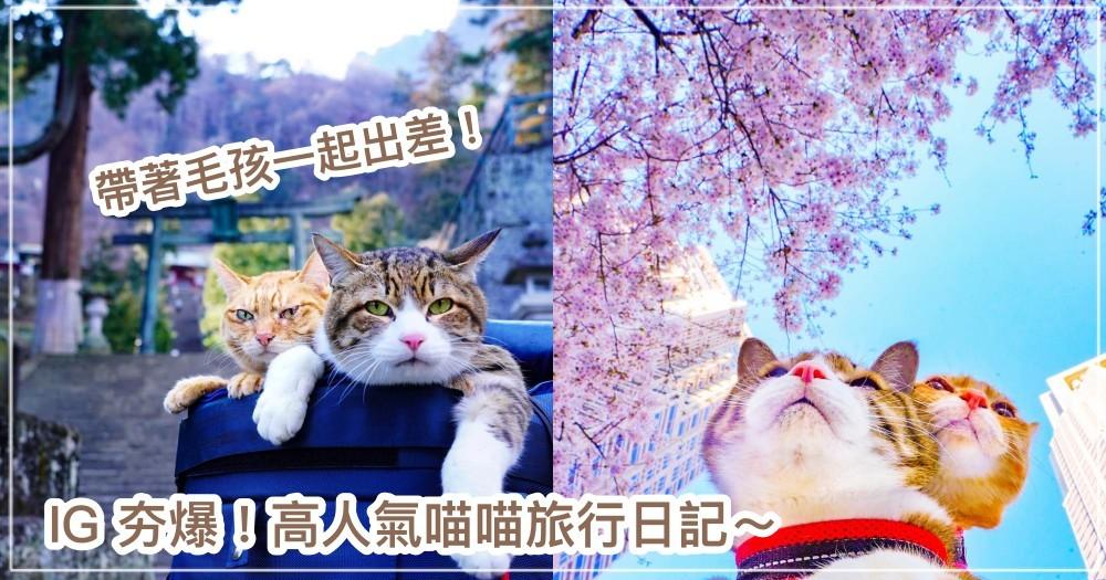 喵喵旅遊達人! IG 夯爆「旅貓日記」超受歡迎,兩隻喵星人走過1000個景點,竟是為了...出差!