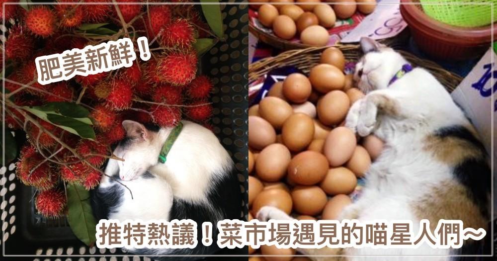 什麼地方都能睡!日本推特熱議『去買菜時遇到的喵星人們!』 網笑:「肥美多汁又新鮮」