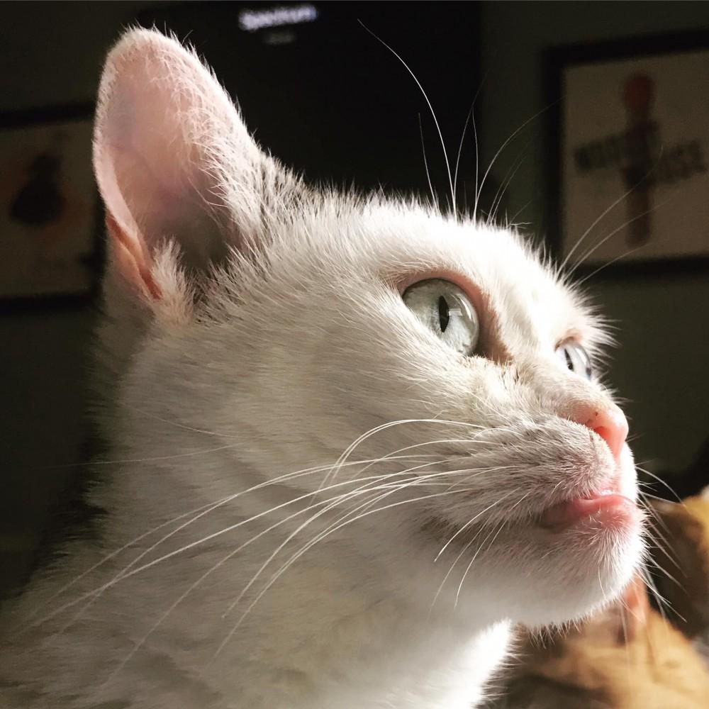 Steve Buscemi Cat