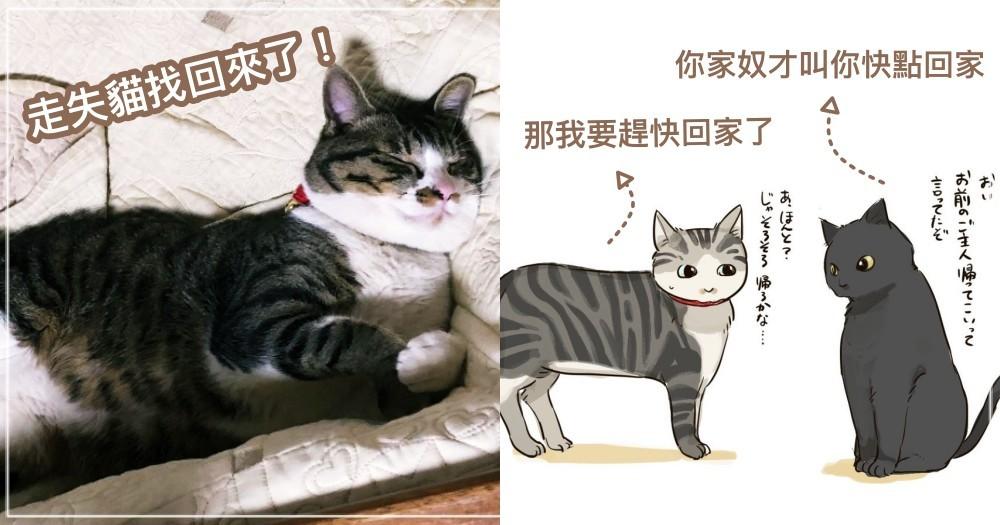不是都市傳說!日推主貓走失「託街貓尋找」成功找回! 網友認證:真的有效!