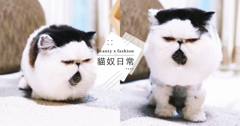 超奇特!日本萌喵Zuu外表像顆大飯糰+腳上穿時尚雪靴,超反差「厭世臉」爆紅~