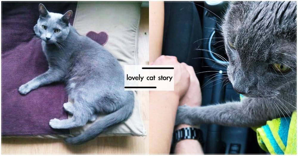 最後一次看獸醫...15歲老貓輕拍奴才安慰:「不要難過」感人道別,惹哭萬千網友!