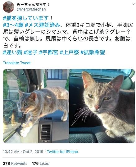 日本走失浪貓
