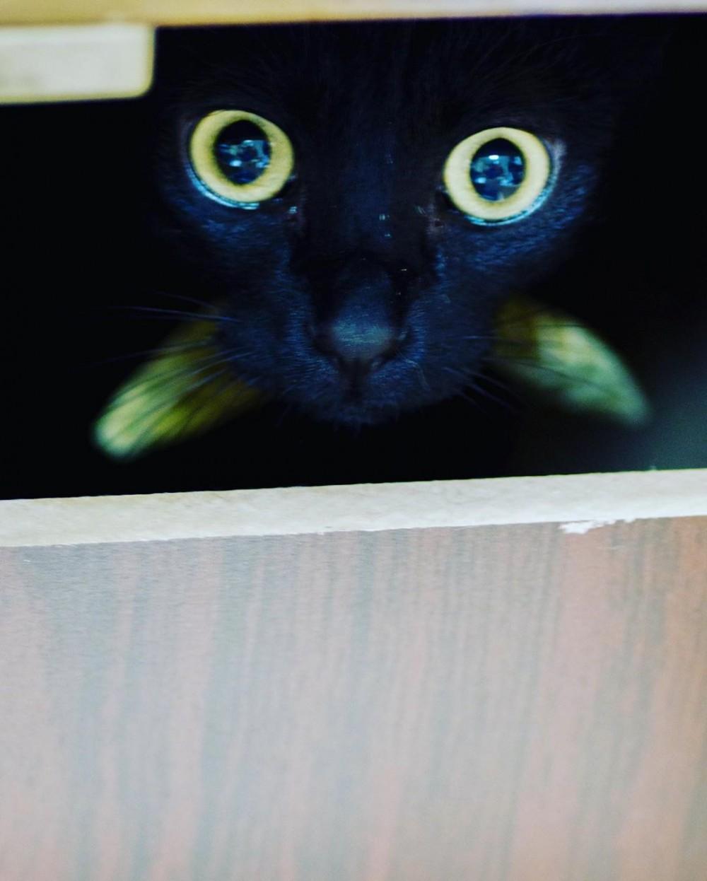 黑貓可洛被酷搜恐怖電影「牠」
