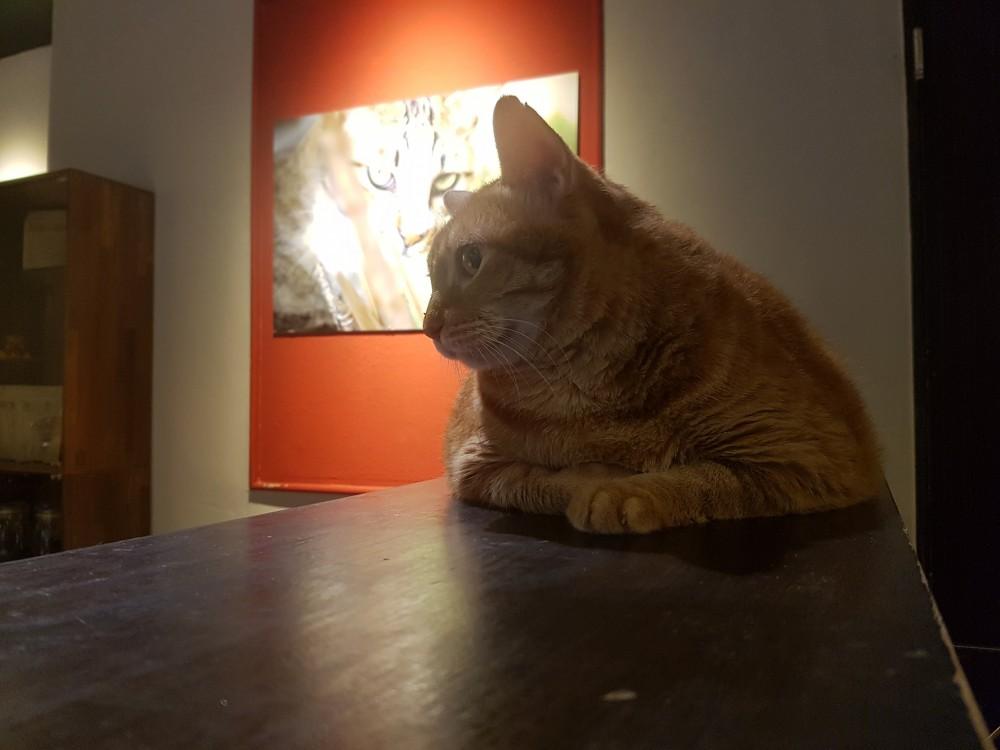 FB 貓嘰咕自家烘焙咖啡