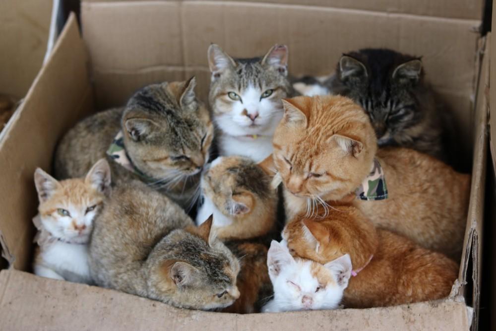 FB 猫の島