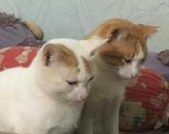FB Đảo Mèo