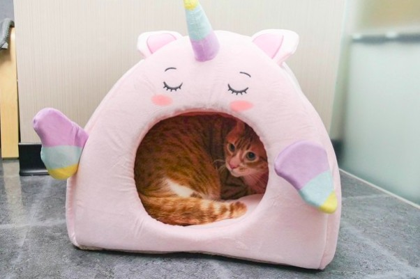 超可愛貓窩