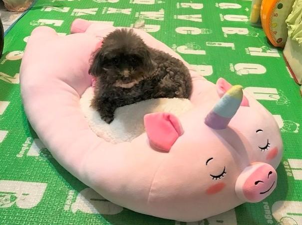 可愛粉紅獨角獸睡墊
