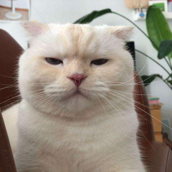 貓咪抱歉的表現