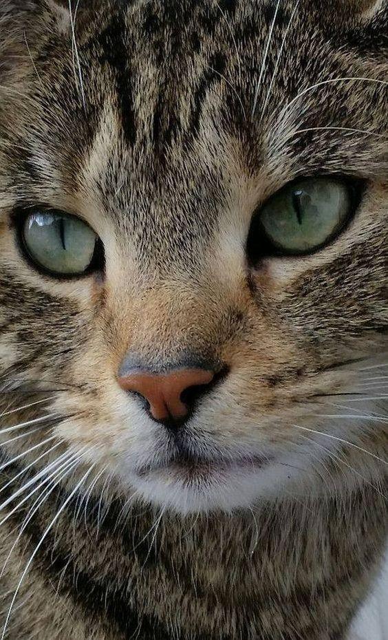 貓鼻子的作用