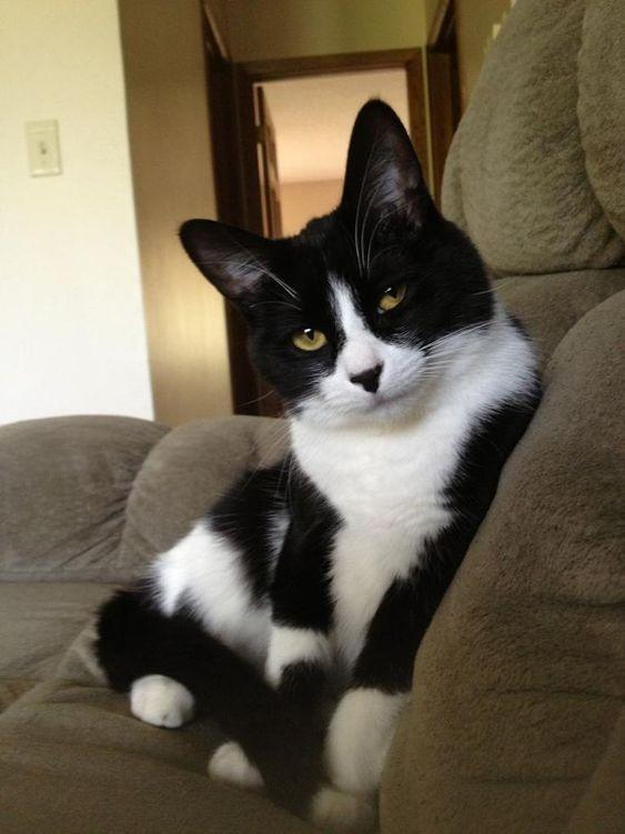 米克斯賓士貓