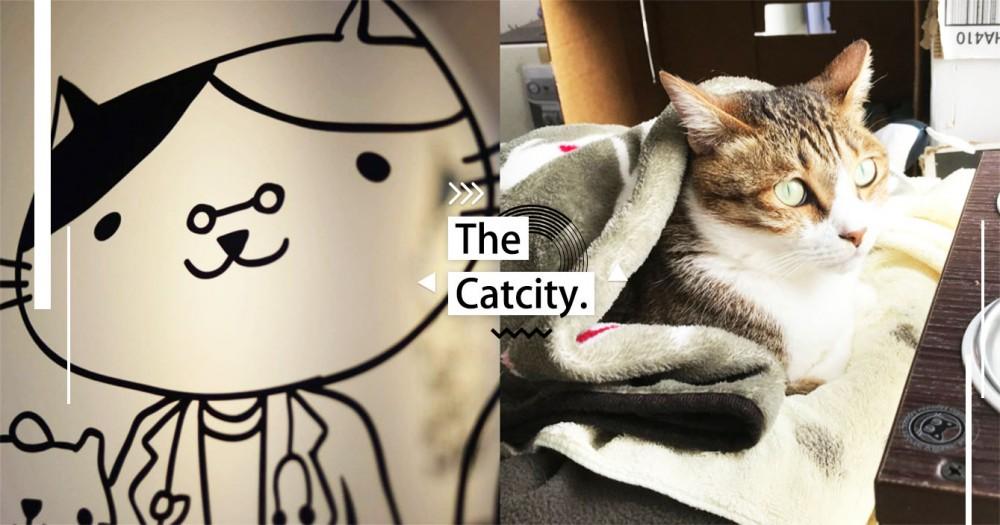 【台北貓醫院】網友狂推!精選台北 3 家「高評價貓醫院」,專治喵星人疑難雜症真的超放心~