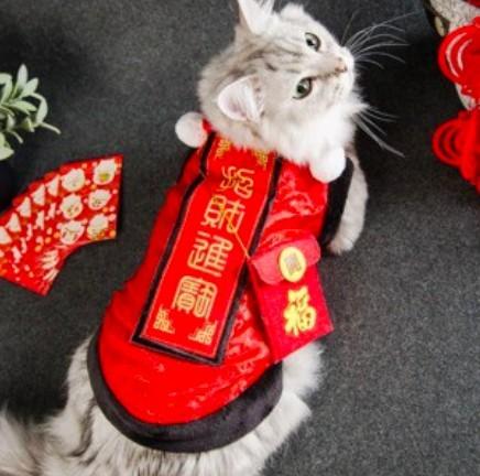 貓咪紅色新春衣服